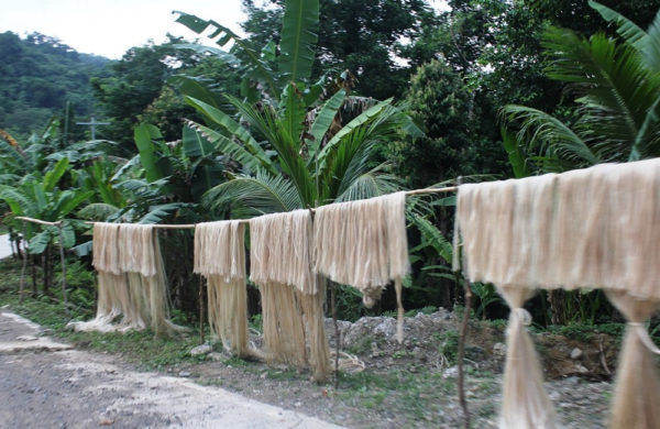 Abaca Fiber in the Phillipines - Millinery Materials