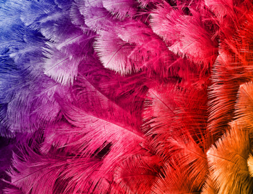 Finding the Best Feathers for Millinery